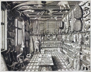 Ole Worm's cabinet of curiosities, from Museum Wormianum, 1655.